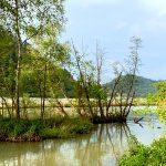 Donauradweg-Passau-Wien-Naturschutzgebiet-Kaiserau Kopie