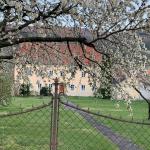 Marillenblüte in der Wachau an der Donau in Niederösterreich