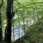 An der Ybbs am Ybbstalradweg in Waidhofen an der Ybbs