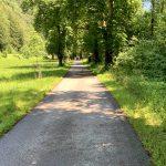 Baum Allee am Ybbstalbahnradweg