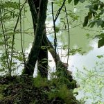 Die Ybbs in Waidhofen