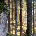 Stein-am-panoramaweg-am-altausseersee