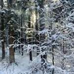 Schöneben im Böhmerwald