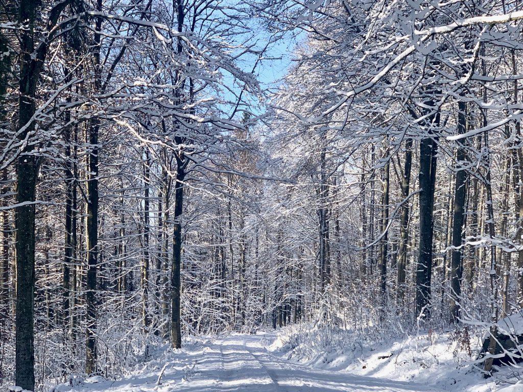 verschneite Forststraße im Böhmerwald