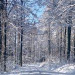 Forststraße im verschneiten Böhmerwald
