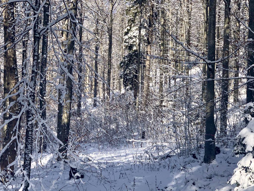 Am Hochficht wandern im Winter