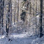 Wandern am Hochficht im Winter