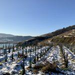 riede altenburg stein an der Donau