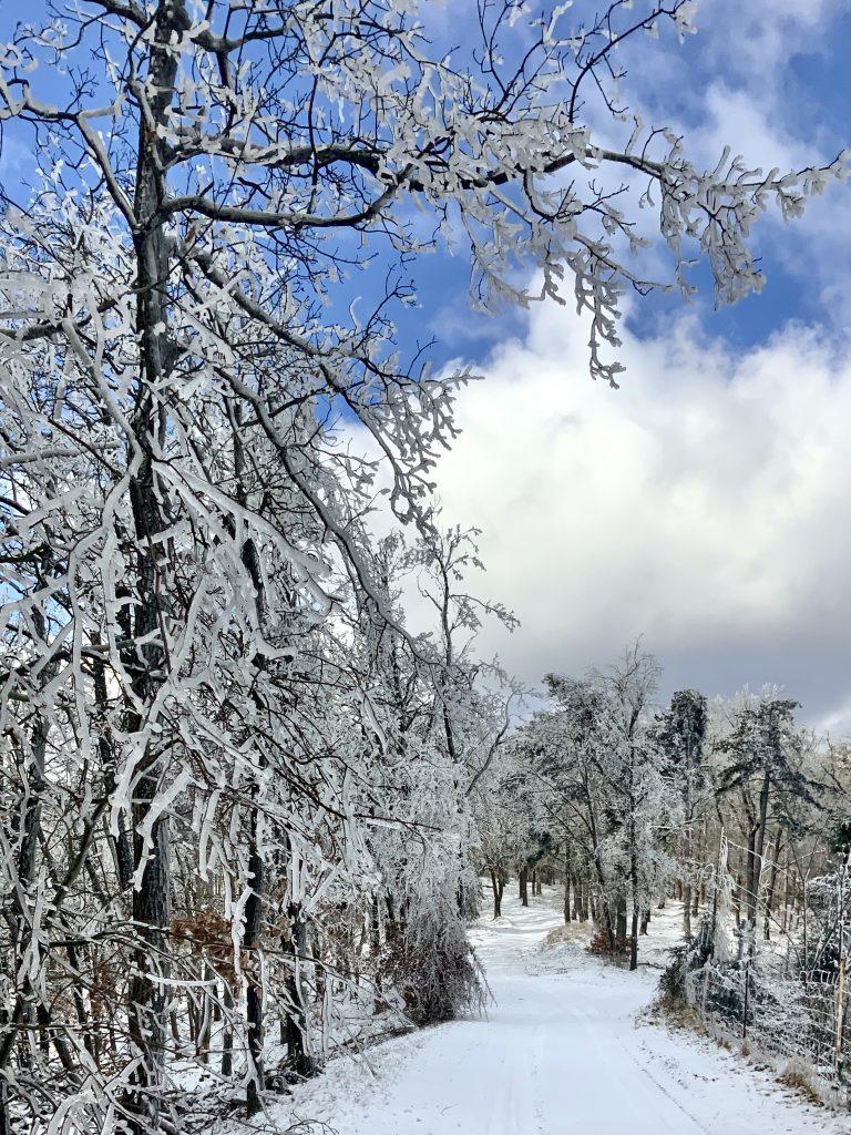 verschneite Bäume unter der Hengelwand