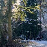 Vormittägliche Wintersonne