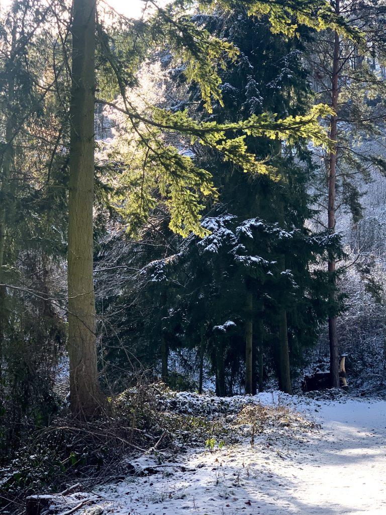 vormittägliche, wärmende wintersonnenstrahlen