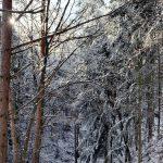 Wintersonne in der Wachau