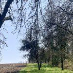 Der Predigtstuhl im Schartner Forst
