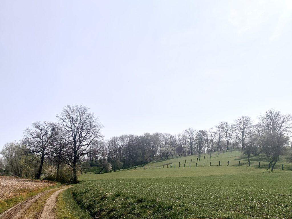 leppersdorf