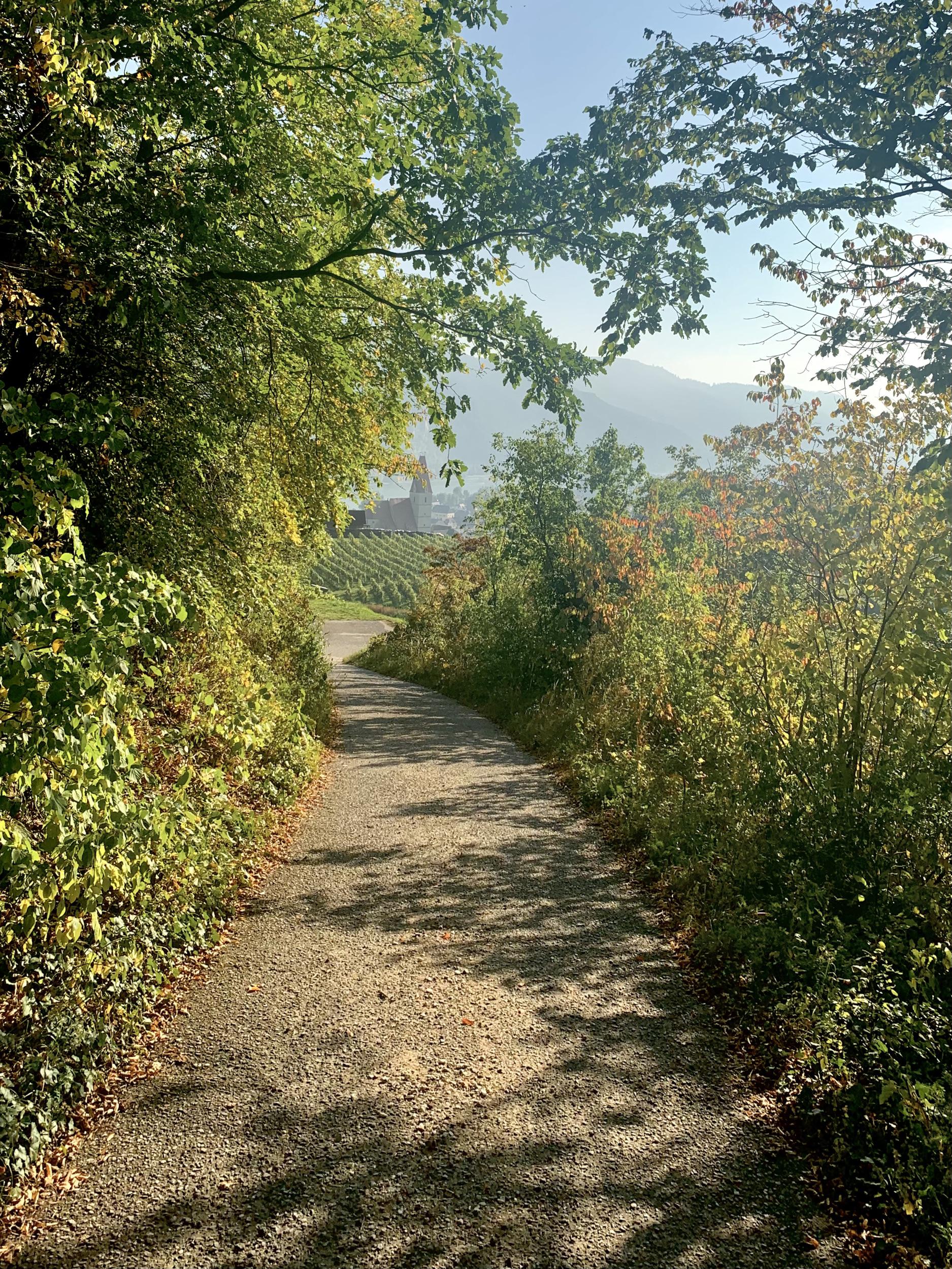 Panoramaweg Achleiten in Weißenkirchen in der Wachau